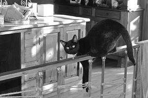 Black cat on rail