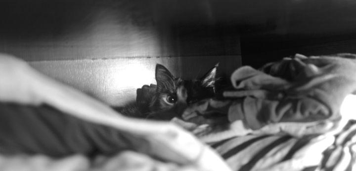 Cat between clothes - Eréndira Hernández