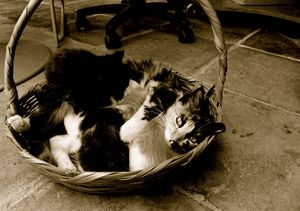 Mother cat with kittens in basket