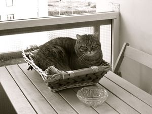 Fat cat on bread basket