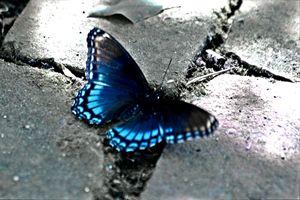 Blue Destiny (B&W with some color)