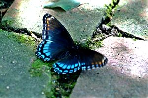 Blue Destiny
