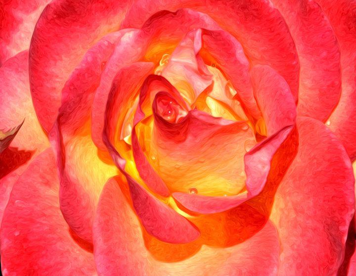 Close up Rose - Capturing Life