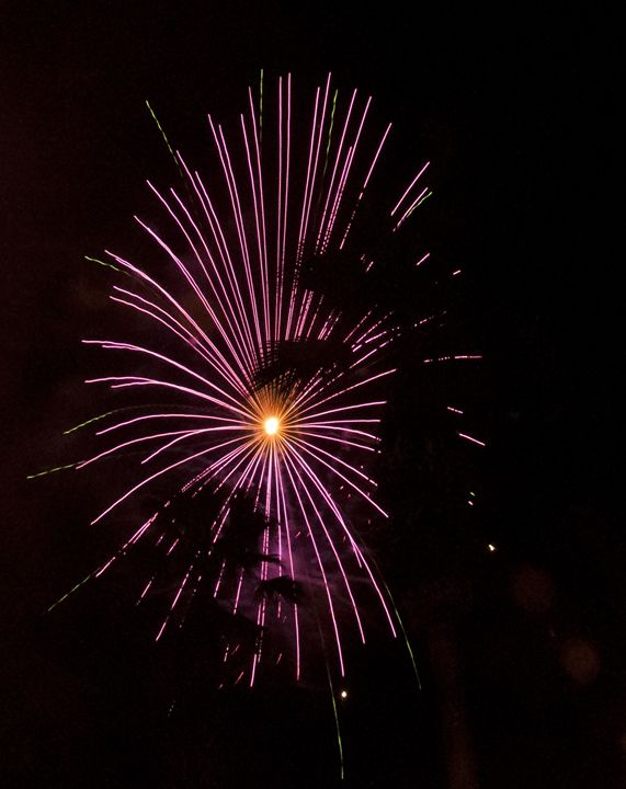 Purple Firework with Tree - Capturing Life