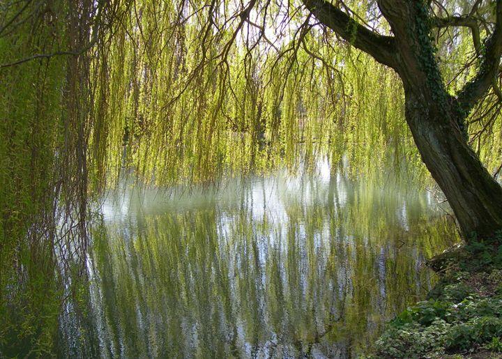 Willow Reflections - Robert Harris