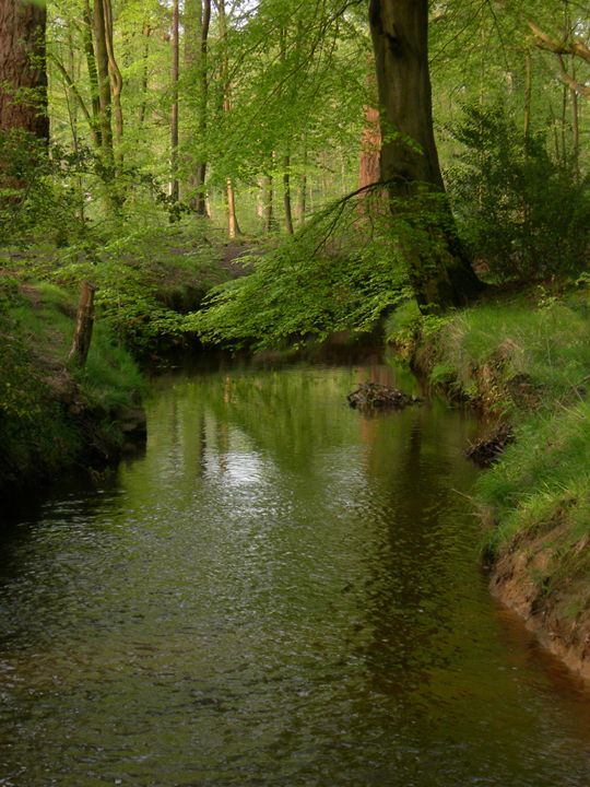 New Forest Reflections - Robert Harris