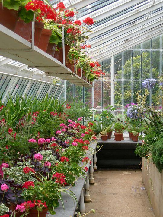 Flowers in a Greenhouse - Robert Harris