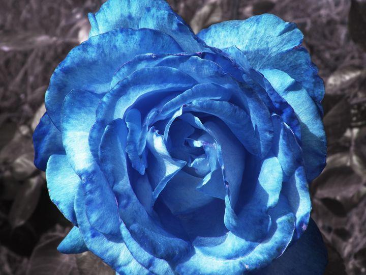 Blue rose - Alberto Elorduy