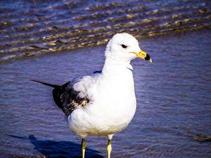 Bird With an Attitude