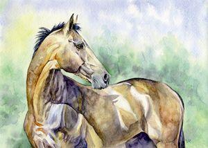 Akhalteke horse