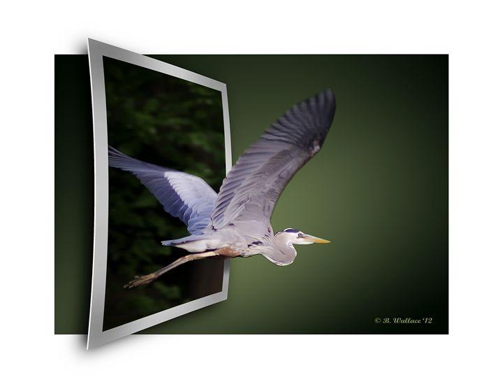 Heron In Flight - OOF - Brian Wallace