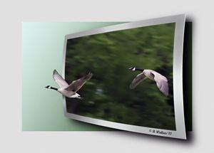 Two Geese In Flight - OOF
