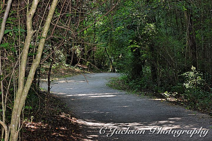 Prattville Bamboo Forest - C Jackson Photography