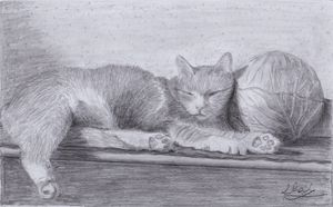 cute sleeping cat 2