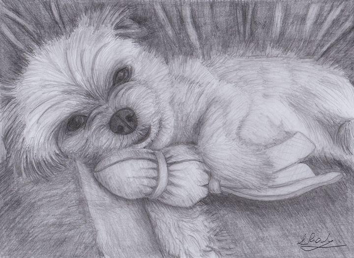 cute puppy - Raluca Feresteanu