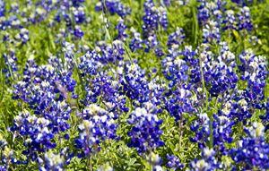 Vibrant Spring Flowers in full bloom