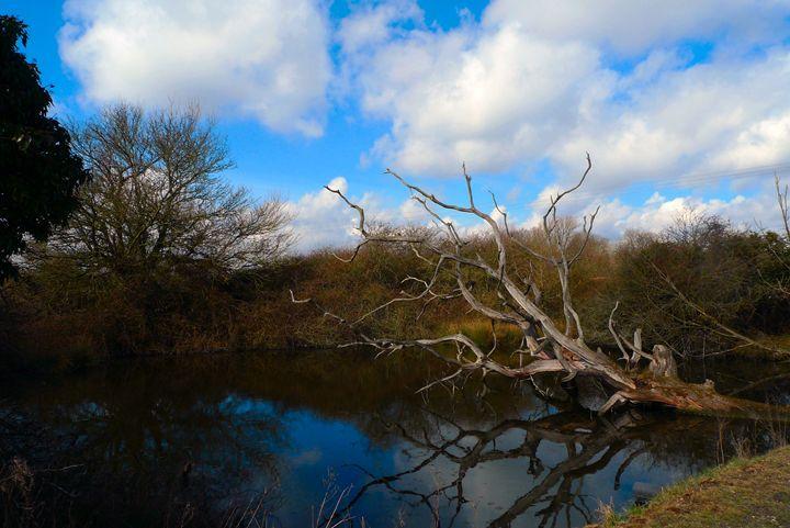 Fallen tree, Suffolk - John Brooks Art & Photography