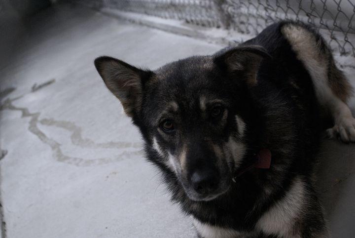 Homeless Dog - Perdidos