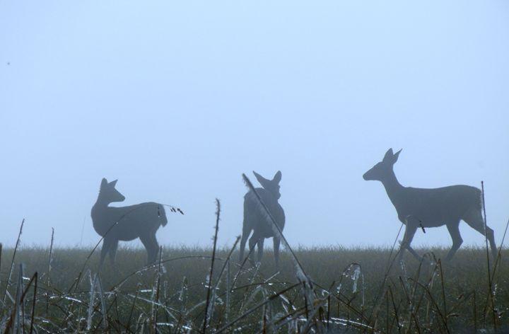 Winter Deer - Perdidos