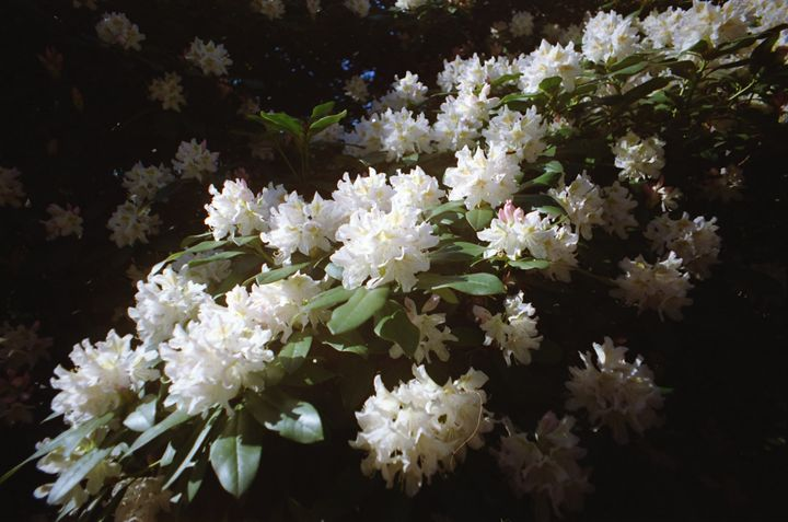Analog Flowers - iHateFabian