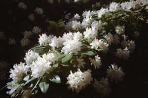 Analog Flowers