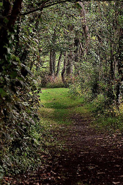 Forest Walk - Toni Sanders