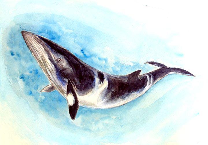 Minke Whale - Chris Hanna