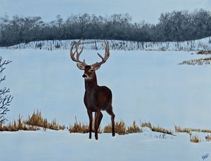 Buck in the snow