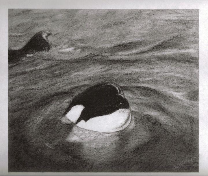 Killer Whale - Muck-About Fine Art