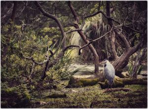 Heron in park - Edward Maesen
