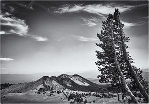 Two trees on mountain