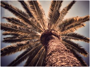 Looking up at a palm tree - Edward Maesen