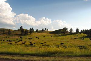 Hills Of Buffalo