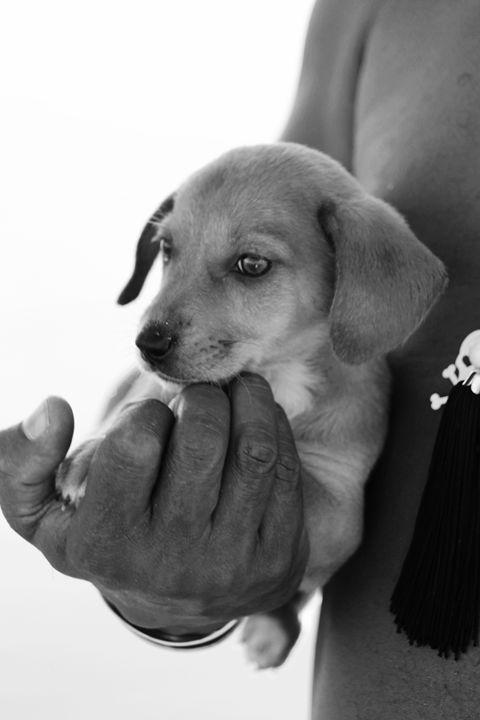 Handy Puppy - Millamuis