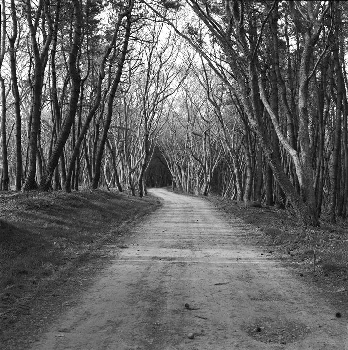 Dirt road to the beach - Hamilton