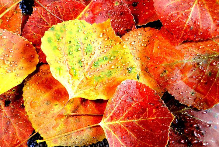 Aspen Leaves 6 - Roxanne Morris