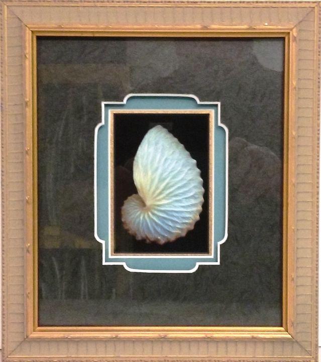 Blue Shell - The Frame Cellar
