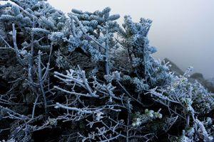Alpine Frost - Max Ablicki - Adventure Photography