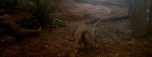 Curious Ferret