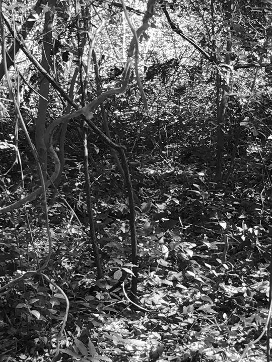 Nature history - Lite