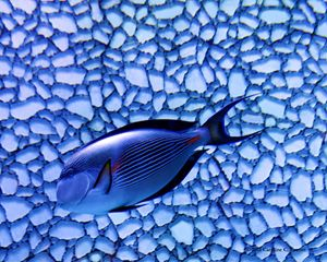 The Abstract Aquarium