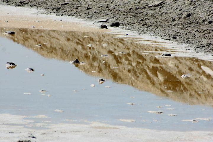 Desert Puddle - an Oxymoron - Nancee