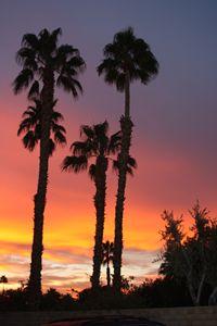 Purple Morning Palm Springs
