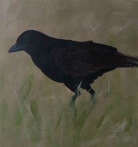 blackbird in grass