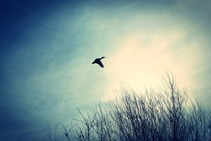 Fly - ThomasW Photography