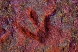 Dinosaur Tracks - Robert Fein Photography