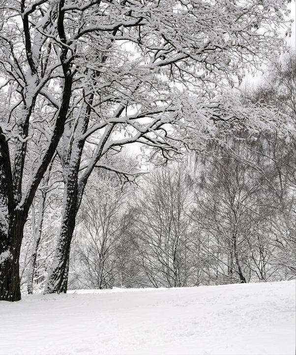 Snow on the trees - Sergejus Lamanosovas - Severas