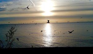 Watery sun and birds in flight