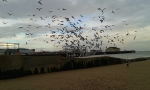 Flock of Seagulls taking off