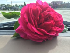 Traveling Roses